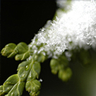friedhofspflanzen wenig wasser